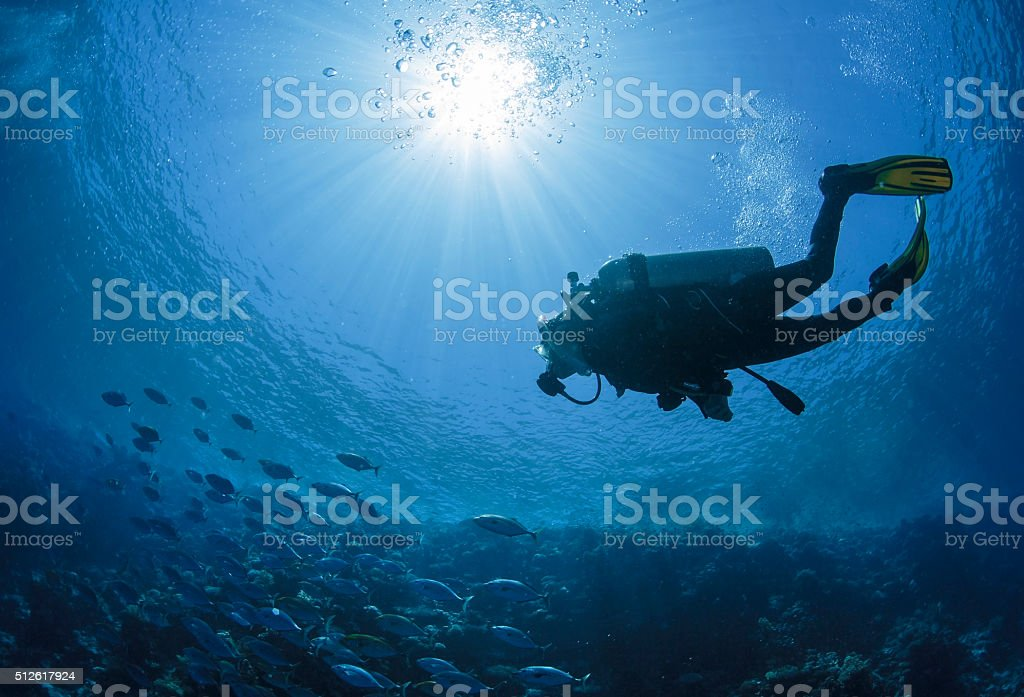Diver swims in a Red Sea Diver swims in the Red Sea in Egypt. Activity Stock Photo