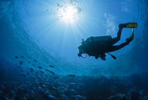 diver swims in a red sea - underwater diving stock photos and pictures