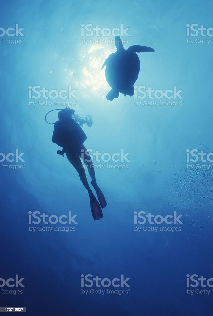 Diver & Turtle royalty-free stock photo