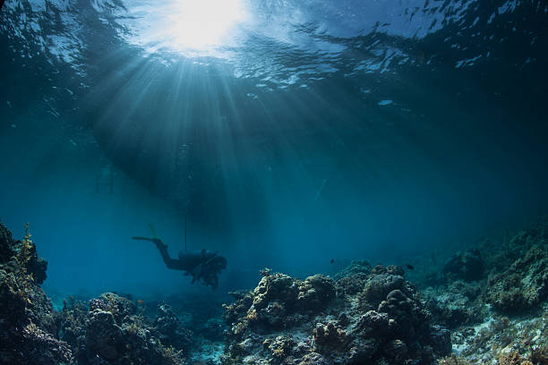 a diver underwater at a reef site - ocean floor stock photos and pictures