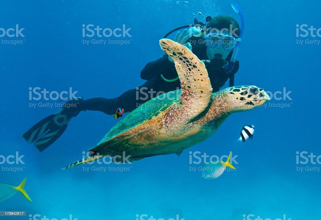Diver w/fish & sea turtle in Great Barrier Reef, Australia stock photo