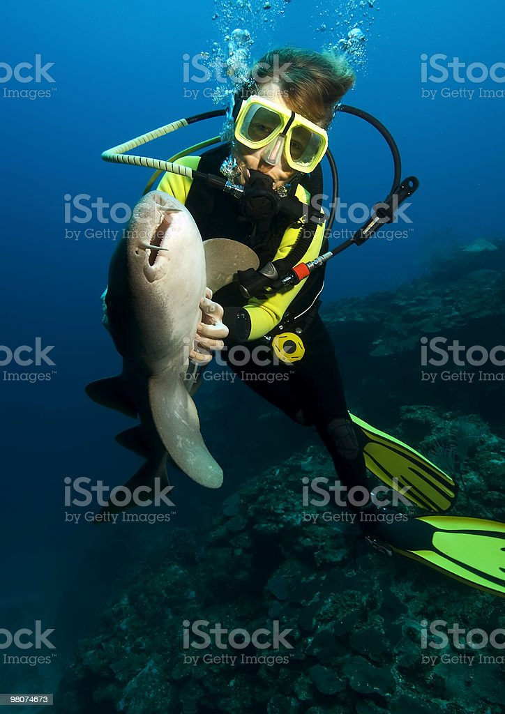 Diver with nurse shark royalty-free stock photo
