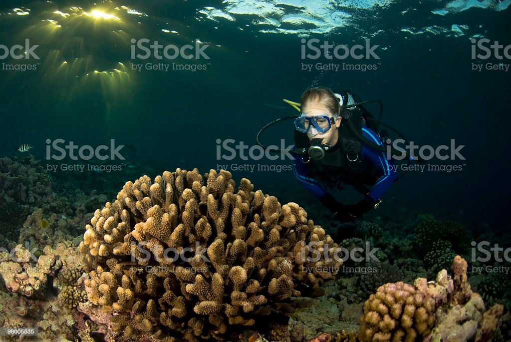 diver with poccilopora coral royalty-free stock photo