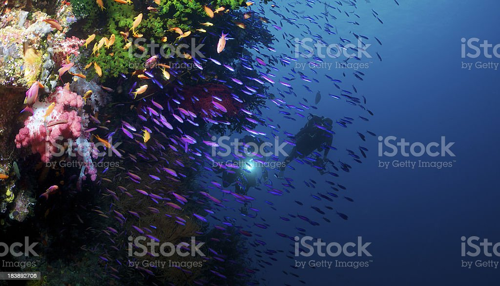 Divers along reef stock photo
