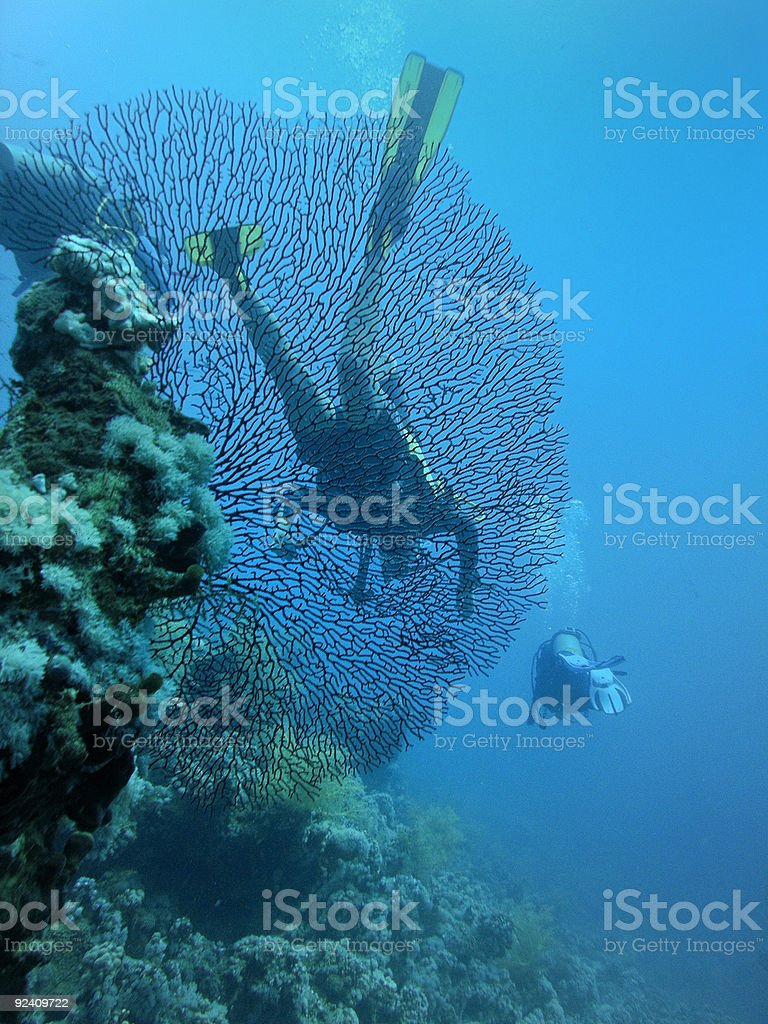 Divers behind of large horny coral royalty-free stock photo