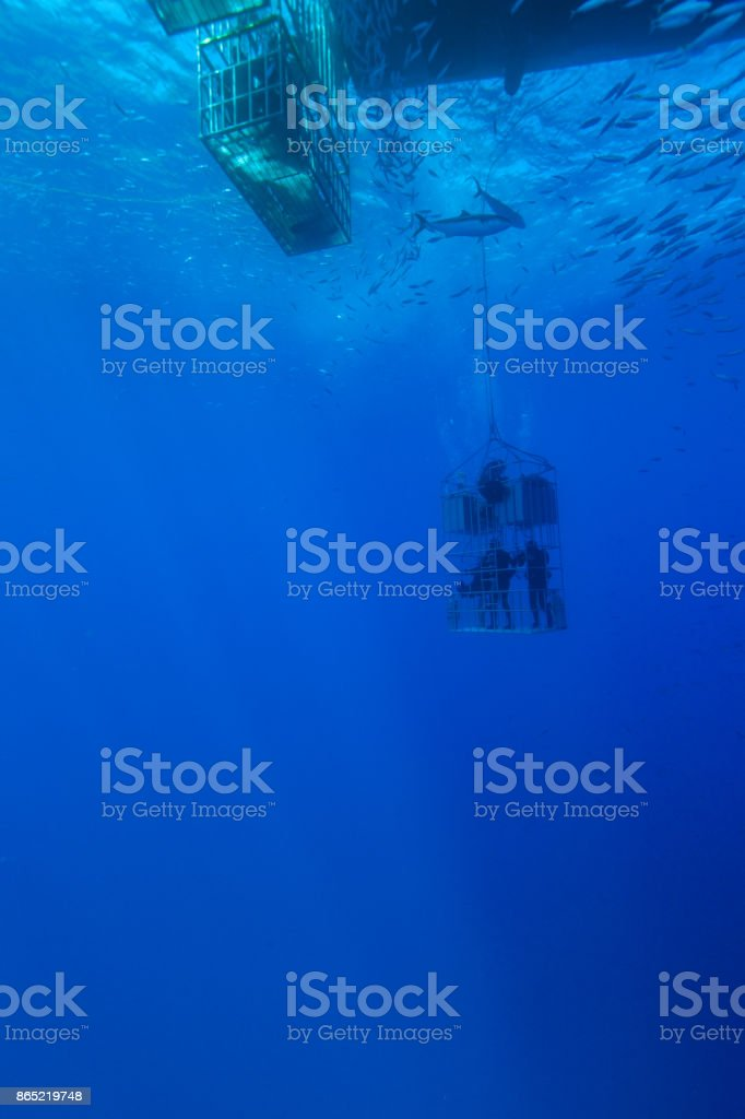 Divers in shark cage stock photo