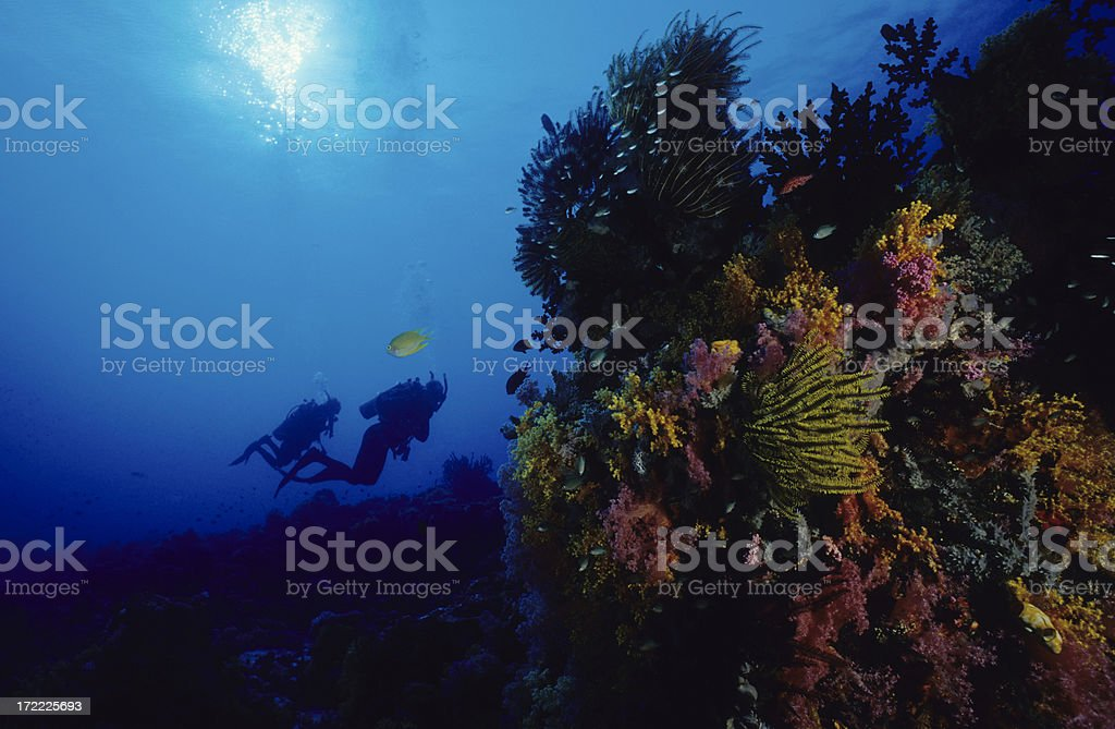 Divers on Reef royalty-free stock photo