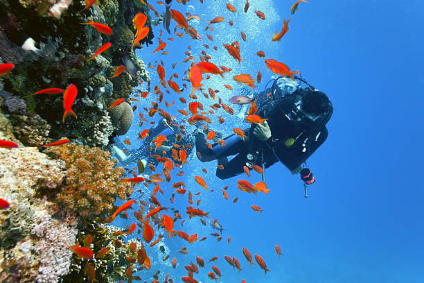 Divers on the coral reef stock photo