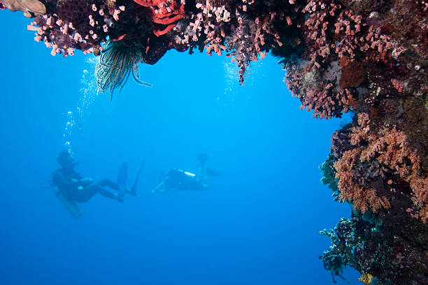 Divers out in the blue under table coral, Sulawesi, Indonesia  sulawesi stock pictures, royalty-free photos & images