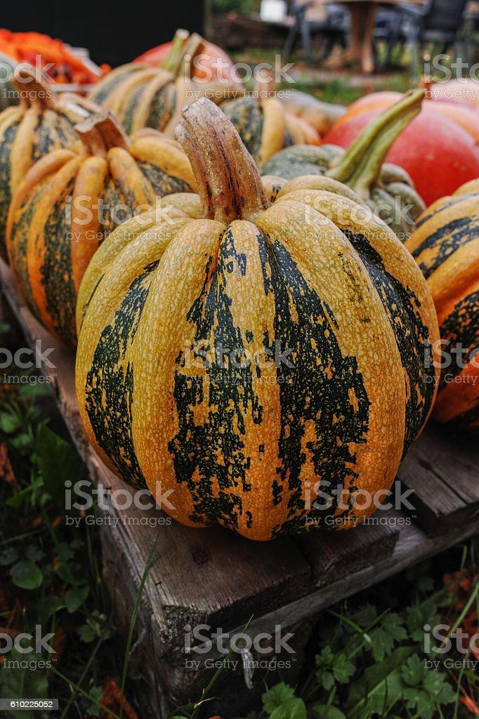 Diverse assortment of pumpkins. Autumn harvest. stock photo