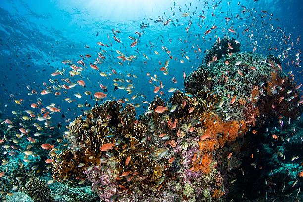 diverse coral reef - biologisk mångfald bildbanksfoton och bilder