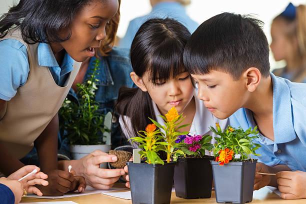 escola primária de alunos a estudar várias instalações na aula de ciências - teacher school solo imagens e fotografias de stock