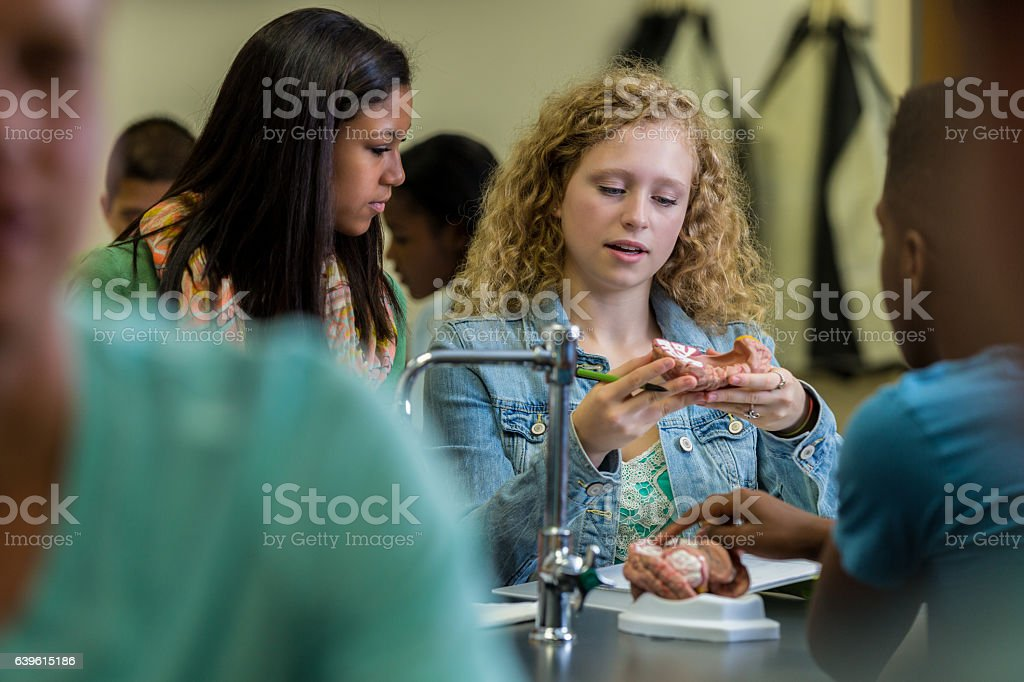 Diverse high school students study human brain in biology class stock photo