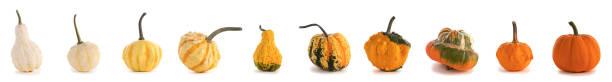 Diverse pumpkins on white background stock photo