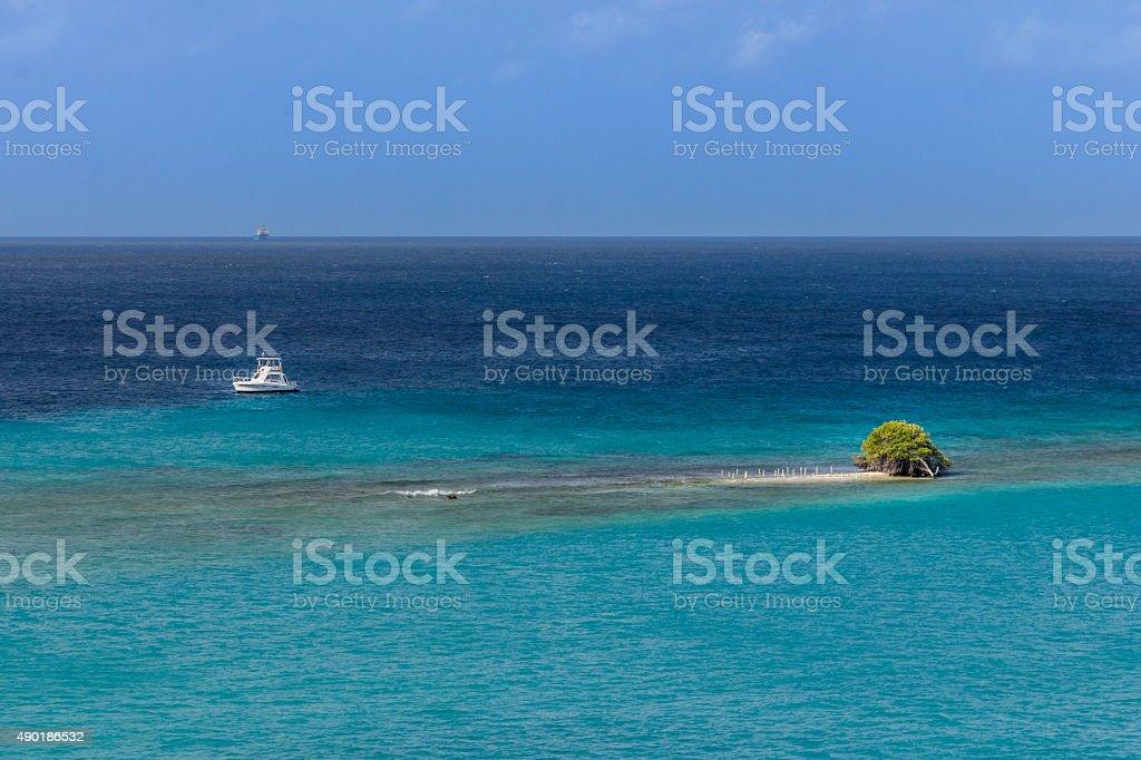 Divi Divi tree on island stock photo