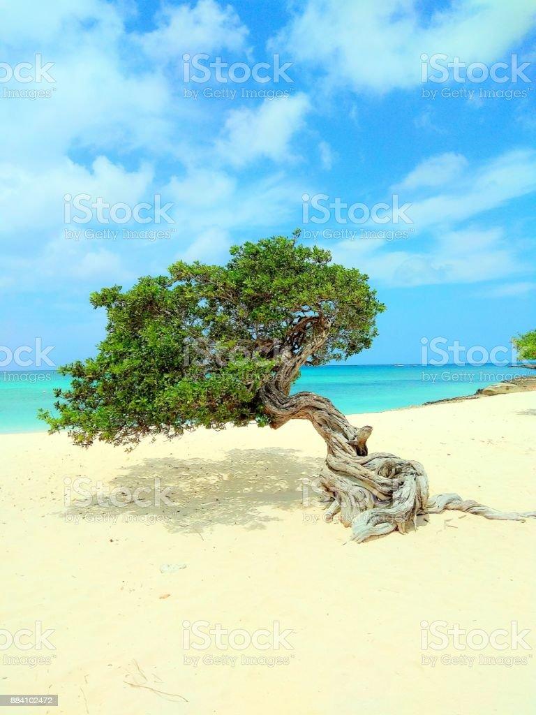 Divi Tree Aruba – zdjęcie