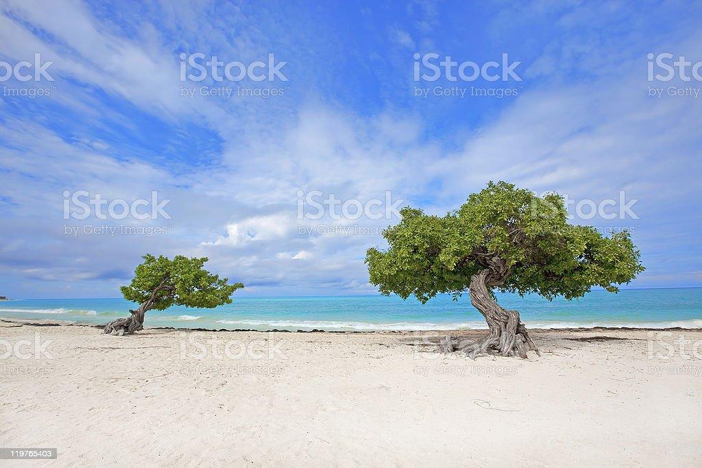 Divi tree stock photo
