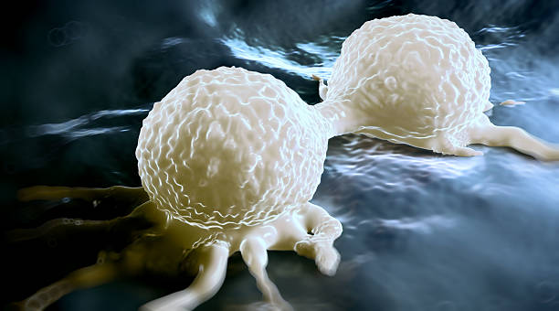 Dividing breast cancer cell stock photo