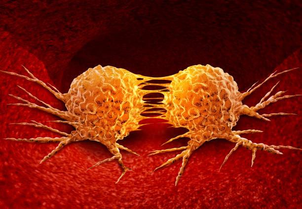 Dividing Cancer Cell stock photo