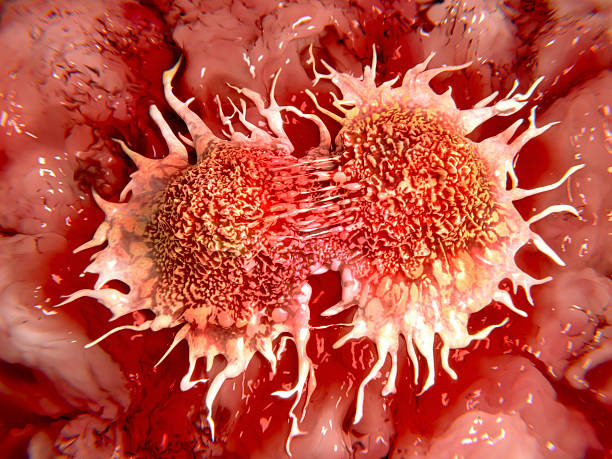 Dividing cancer cells Two cancer cells (prostate cancer cells) in the mitotic process. metastasis stock pictures, royalty-free photos & images