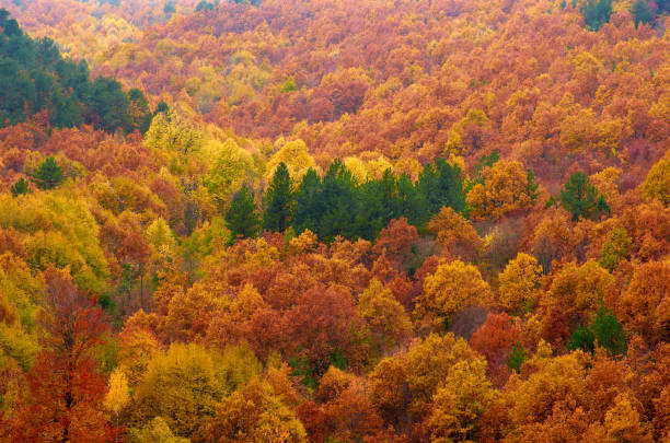 Divine beauty of the forest in autumn colors. stock photo