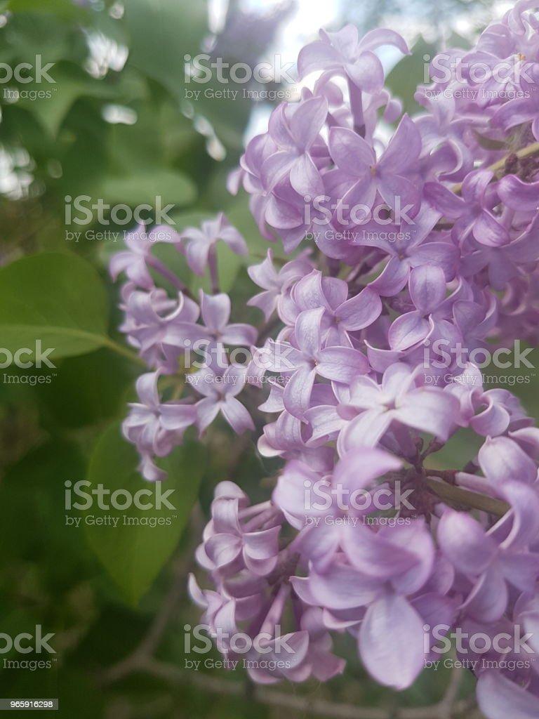 Божественный сад - Стоковые фото Без людей роялти-фри