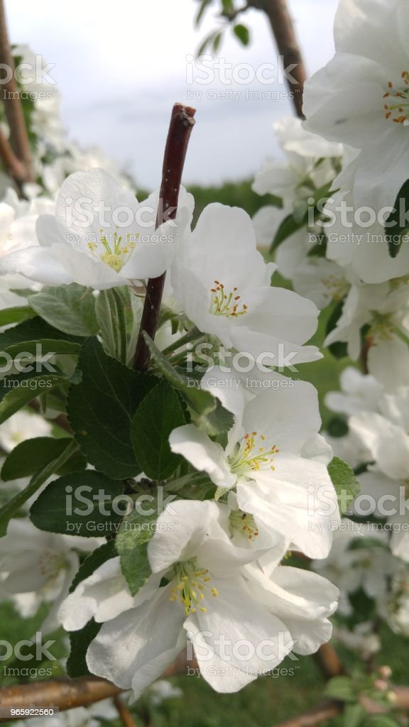 Divine tuin - Royalty-free Aangelegd Stockfoto
