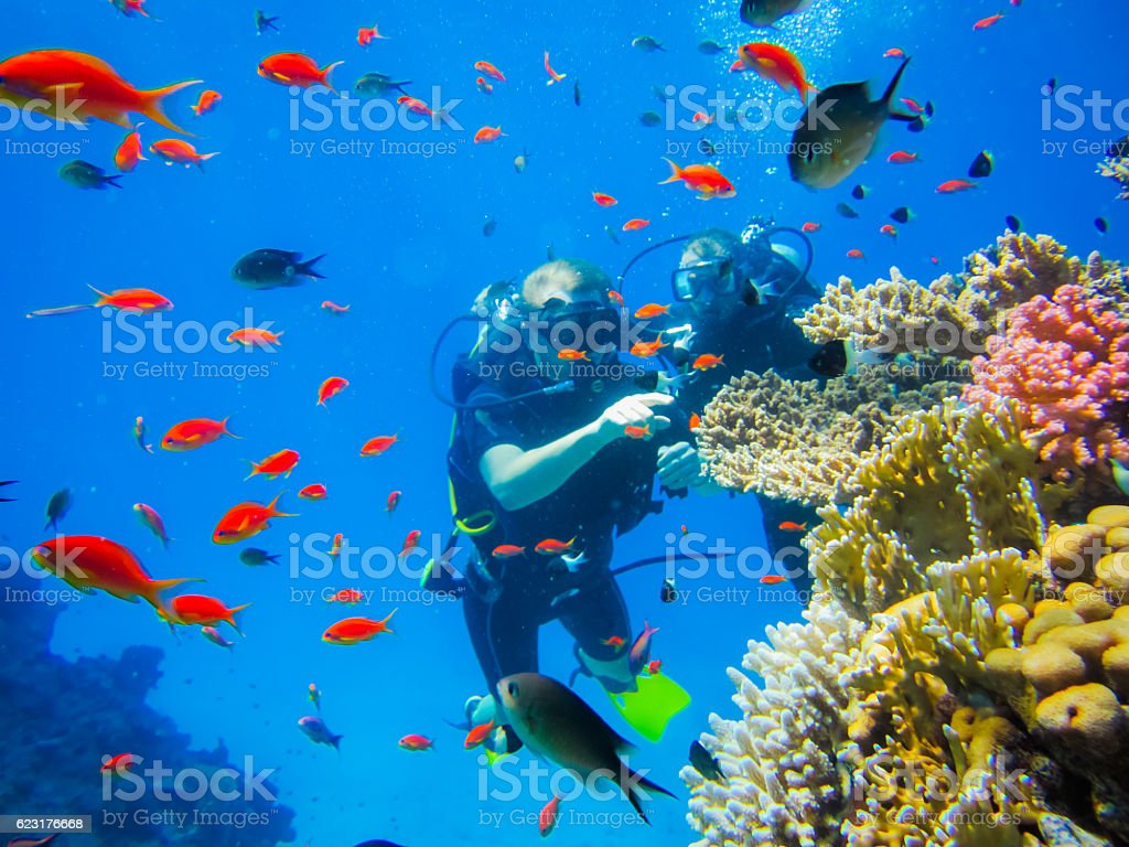 Diving at the coral reefs in Egypt stock photo