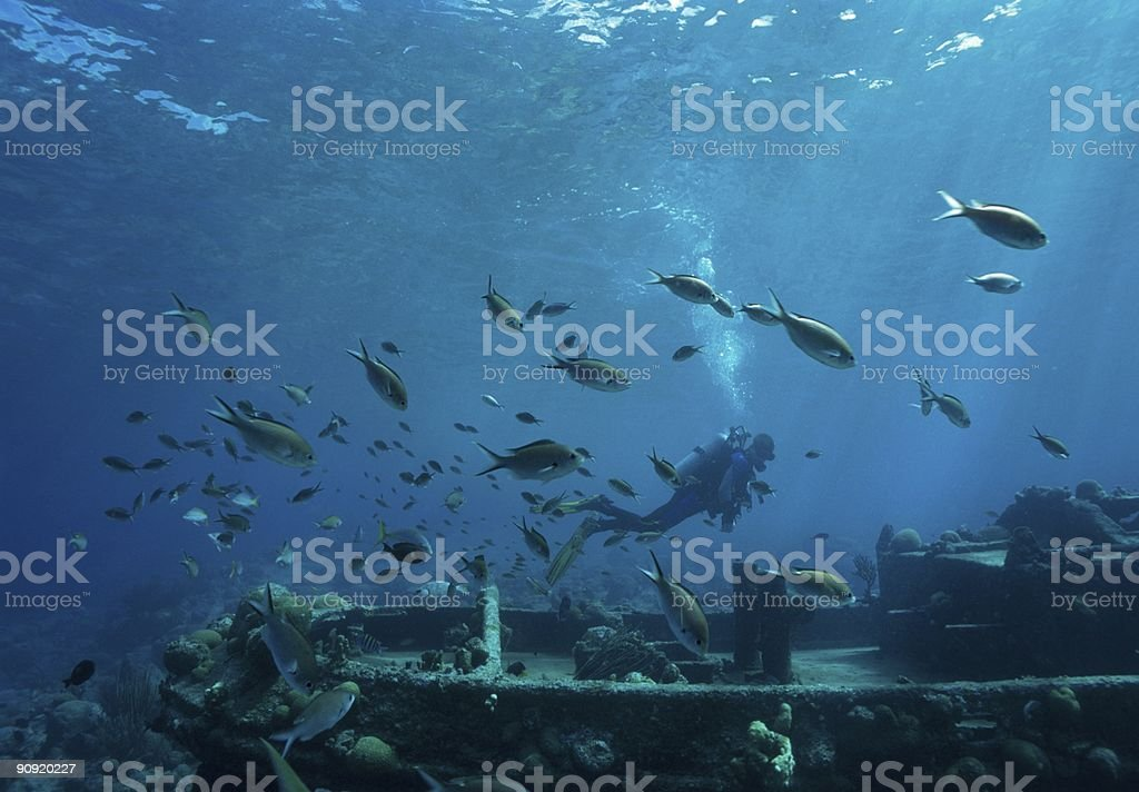 Diving Caribbean Sea royalty-free stock photo