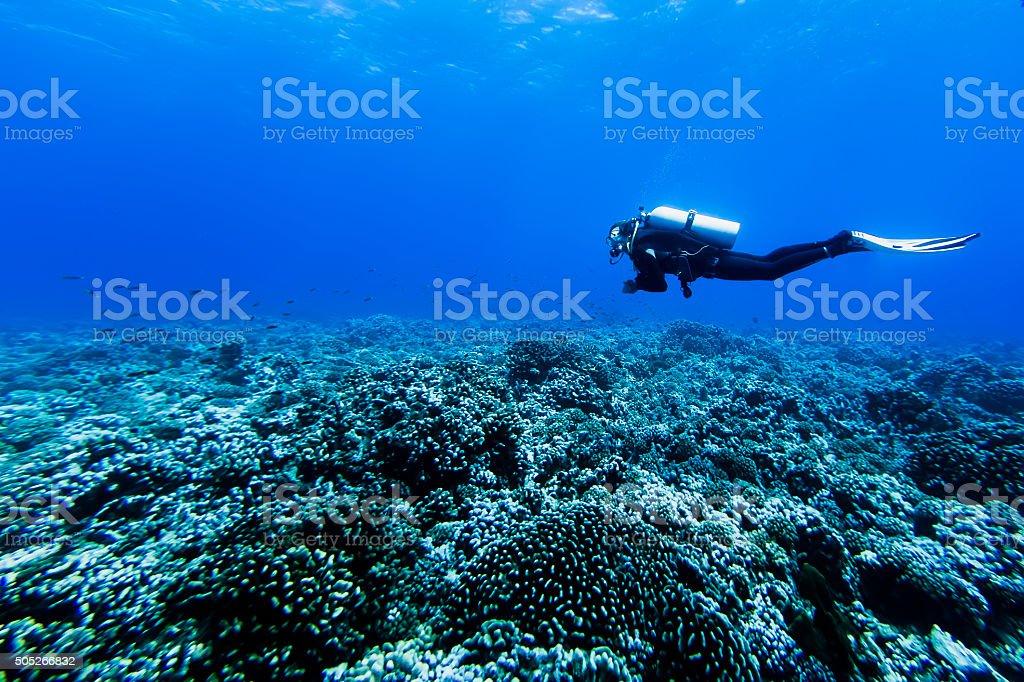 Diving Deep in Tiputa Pass, Rangiroa, French Polynesia stock photo