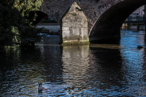 Tauchen Ente in der Nähe einer Steinbrücke des alten Teils der Stadt – Foto
