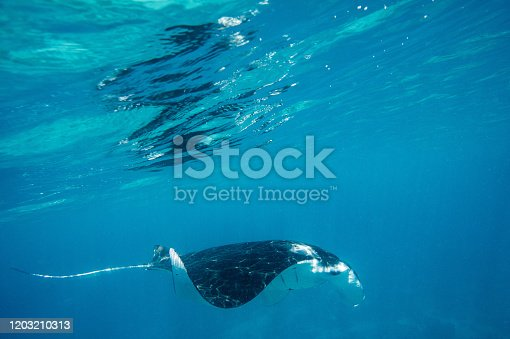 Indonesias incredible underwater landscape and animals full of turtles, mantas and funny jellyfishes.
