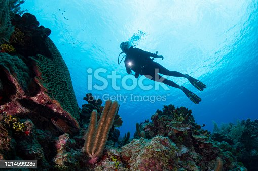 View of a female diver and the stunning Caribbean coral reefs in Grand Cayman - Cayman Islands