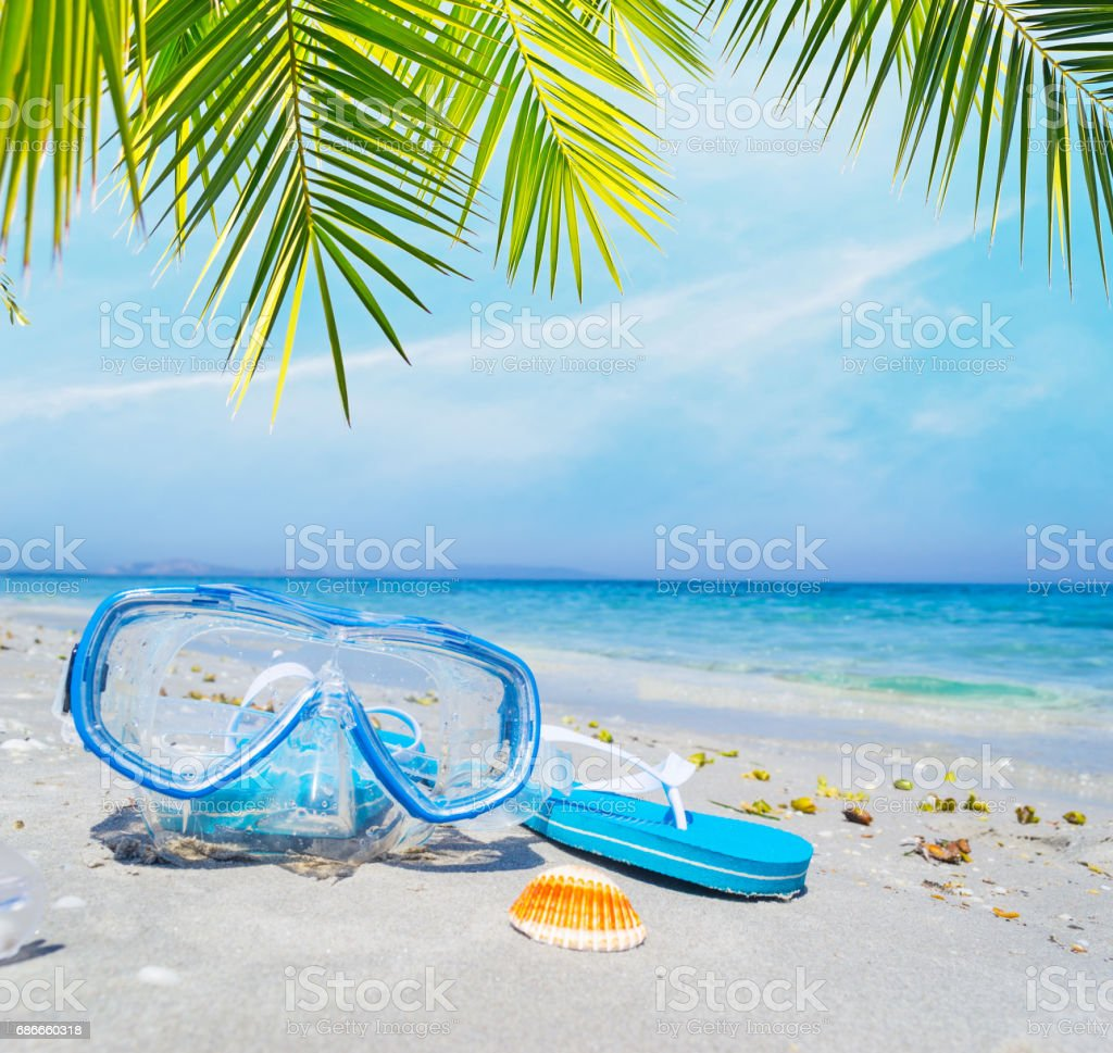 Diving mask and flip flops under a palm tree royalty-free stock photo