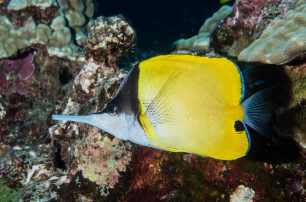 diving, scuba, lanai, hawaii - wreck diving stock pictures, royalty-free photos & images
