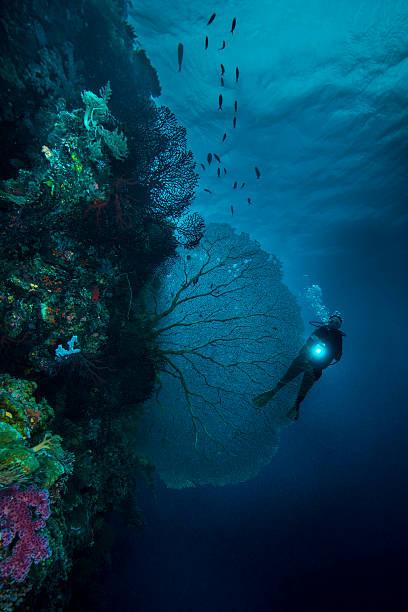 Mergulho a queda em Palau-Micronésia - foto de acervo