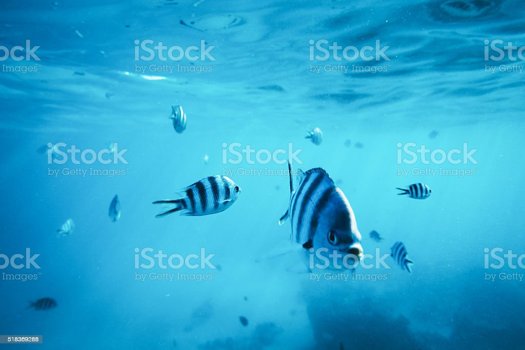 Diving With Fishes stock photo