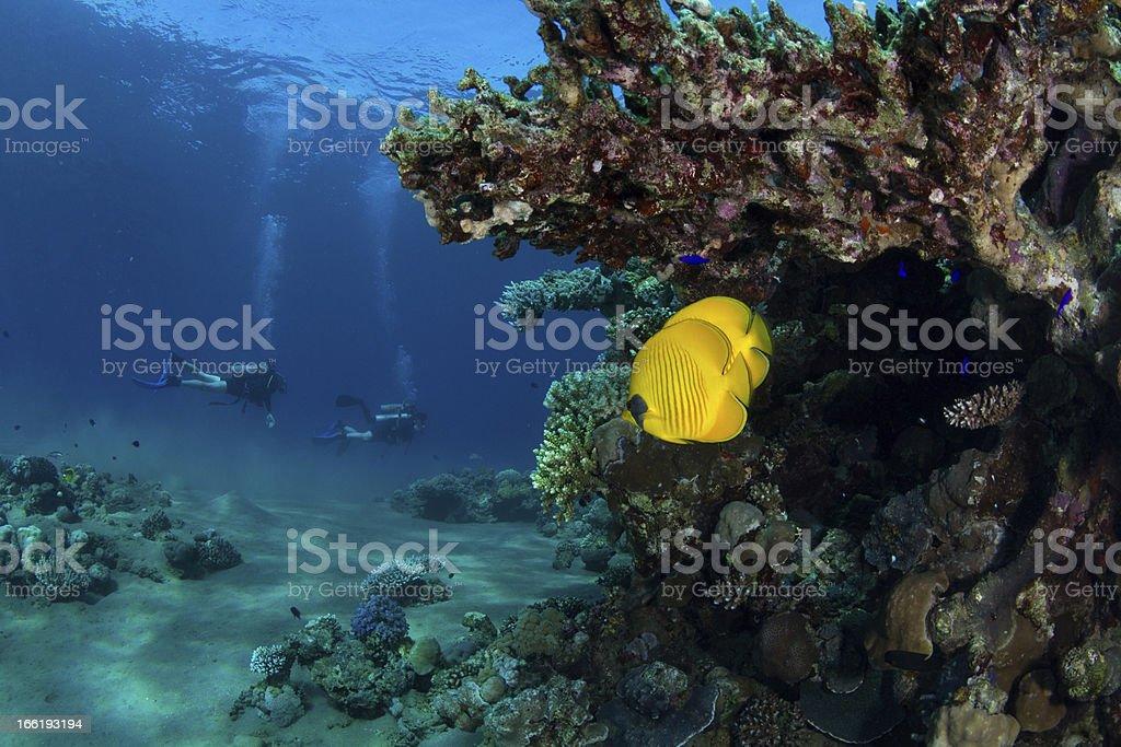 Divingr Buddies royalty-free stock photo