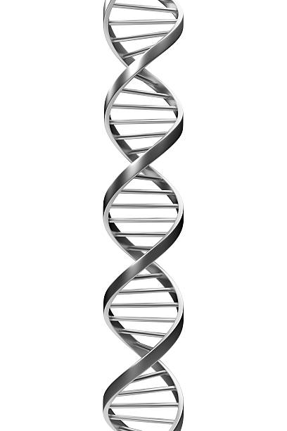 "Dna ""Metallic DNA, isolated."" helix model stock pictures, royalty-free photos & images"