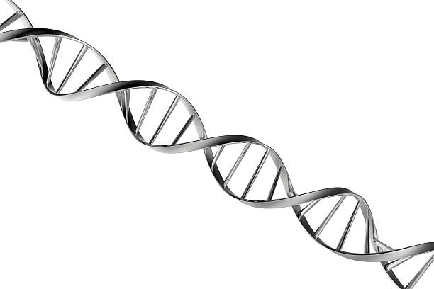 Dna http://vamorelia.com/ibanners/7.jpg helix model stock pictures, royalty-free photos & images