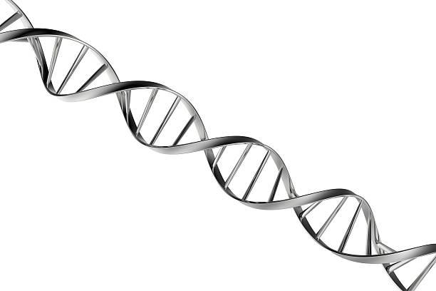ADN - Photo