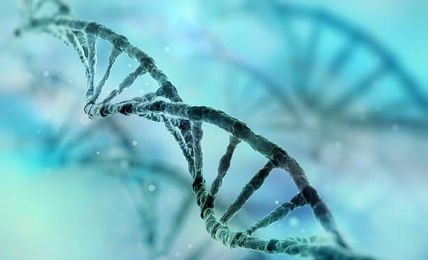 hebra de adn - investigación genética fotografías e imágenes de stock