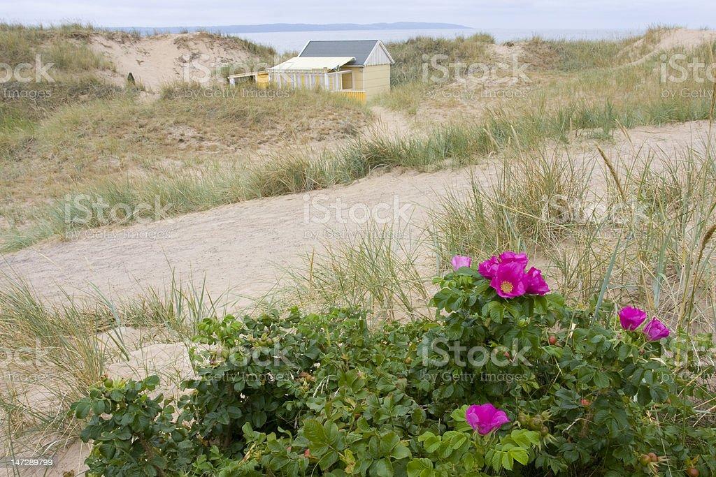 Dünenlandschaft in Südschweden stock photo