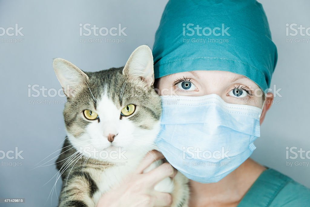 I do care of your animal ! royalty-free stock photo