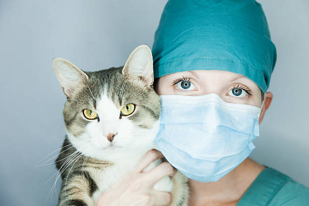 I do care of your animal ! stock photo