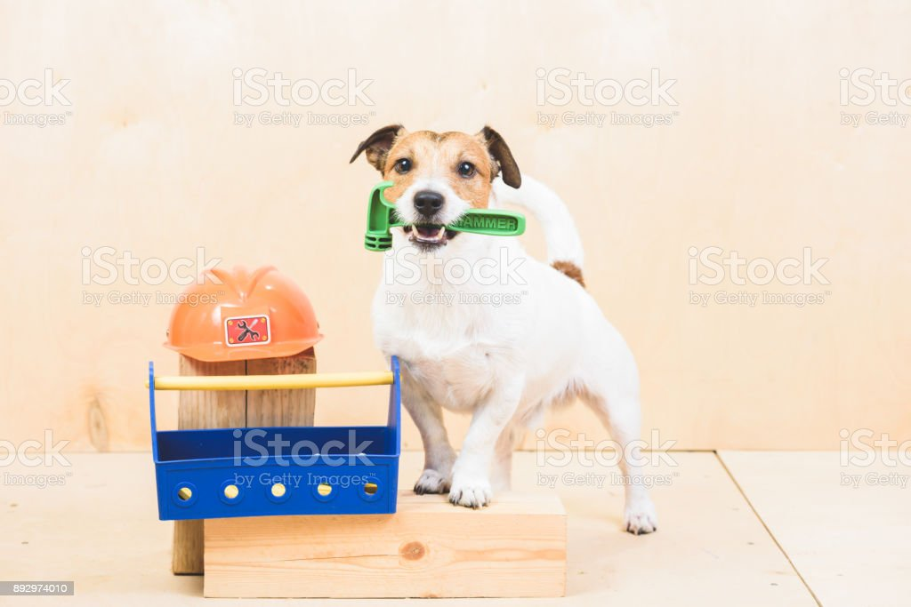 Do it yourself concept with funny dog as builders assistant stock do it yourself diy concept with funny dog as builders assistant royalty free solutioingenieria Gallery