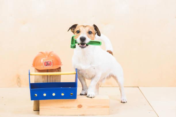 heimwerker (diy) konzept mit lustiger hund als bauherren assistent - hundezubehör diy stock-fotos und bilder