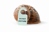 A snail shell with a do not disturb sign hanging off it, set in white surrounding.