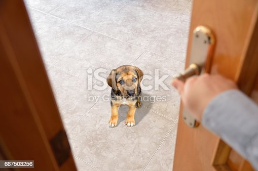 istock Do not leave the room 667503256