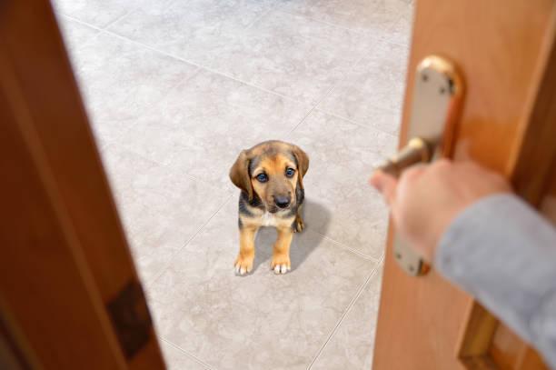 no deje la sala de - perros abandonados fotografías e imágenes de stock